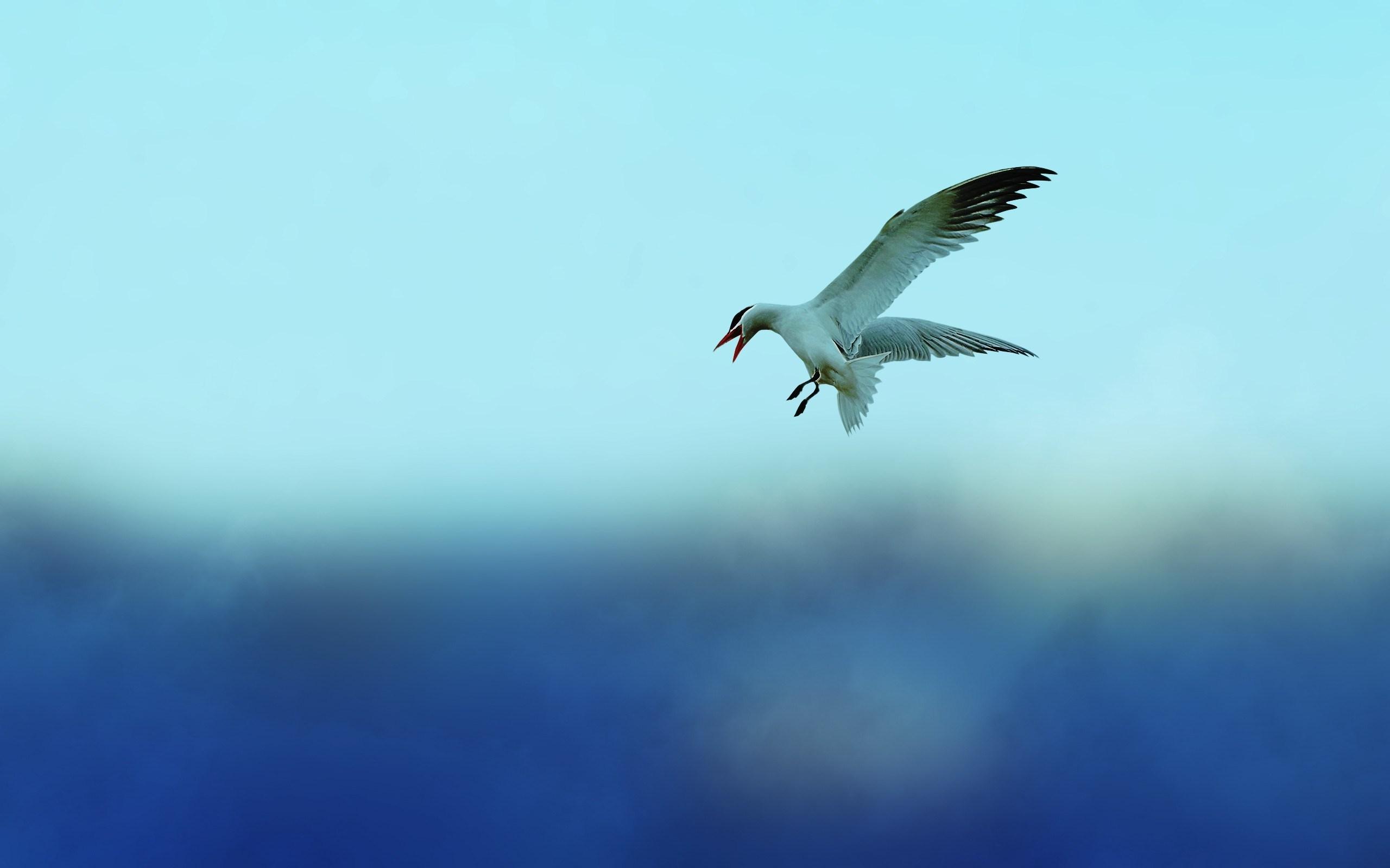 bird wings wallpaper