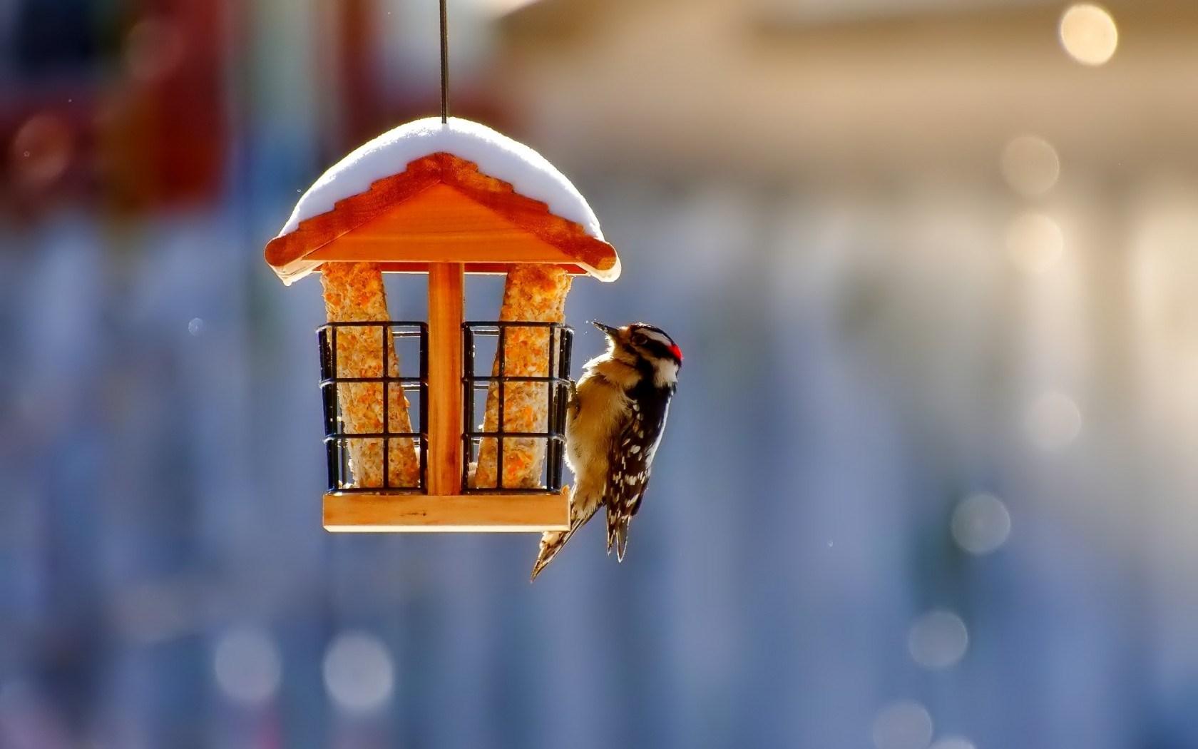 birdhouse beautiful wallpaper