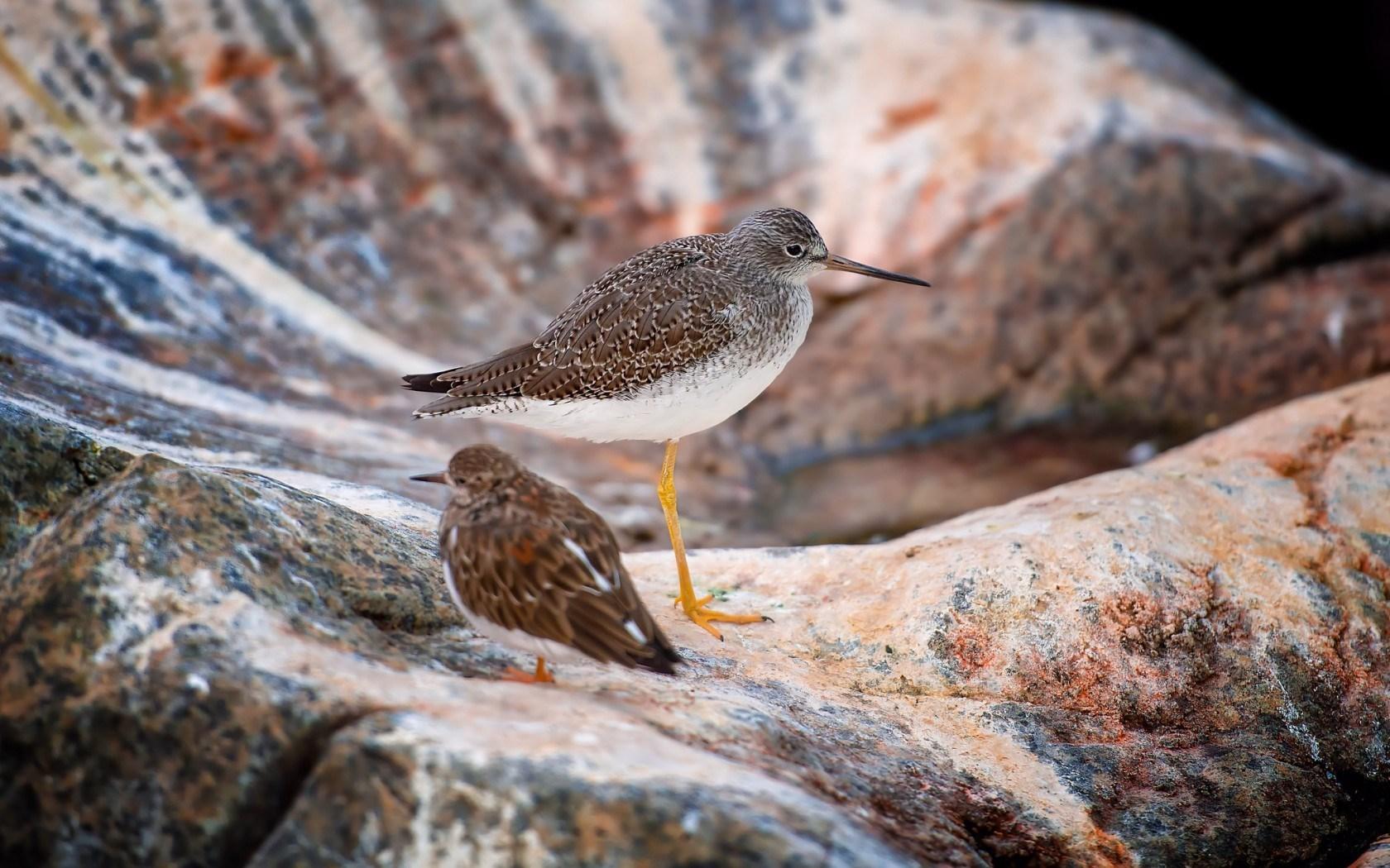 birds unique