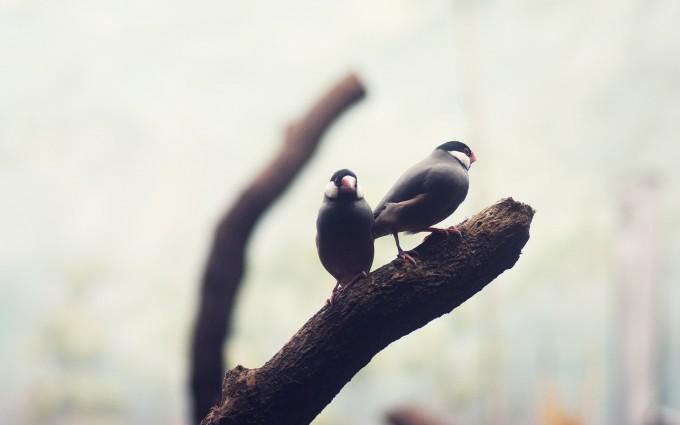 birds wallpaper black and white