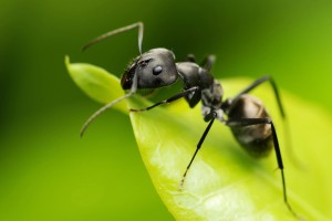 black ant wallpaper