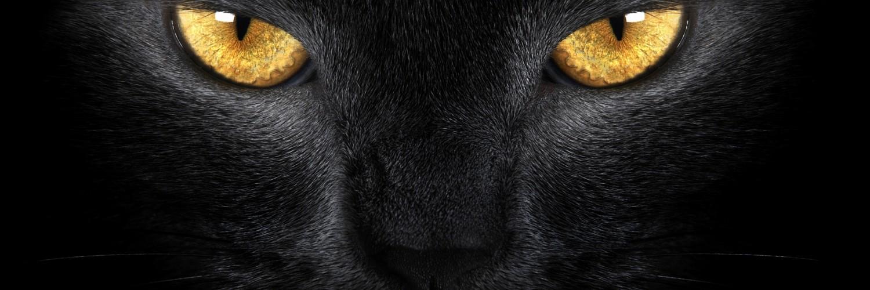 Scary black cat eyes
