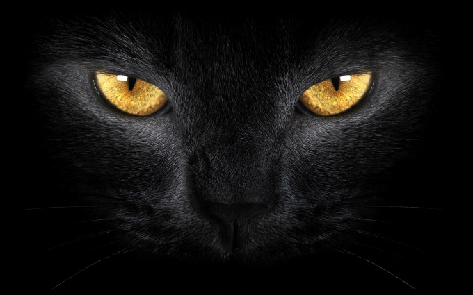 black cat scary eyes