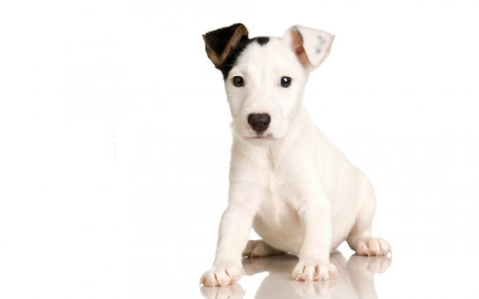 black white pup images
