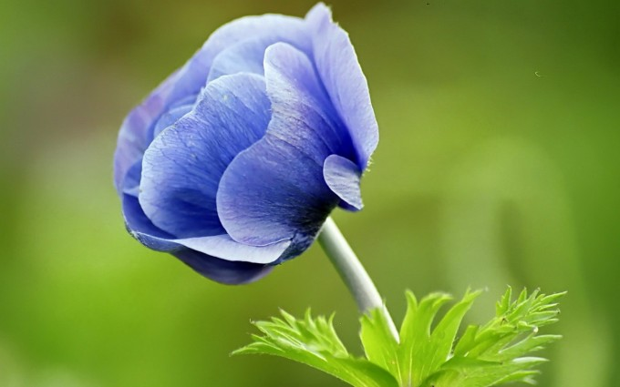 blue flowers nature hd