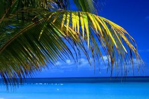 blue sea palms beach