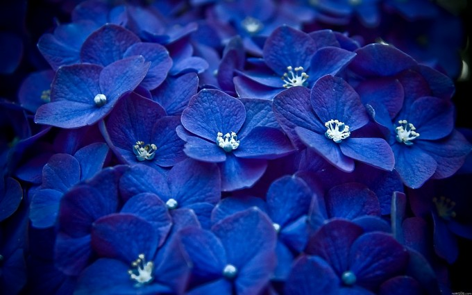 blue wallpaper nature