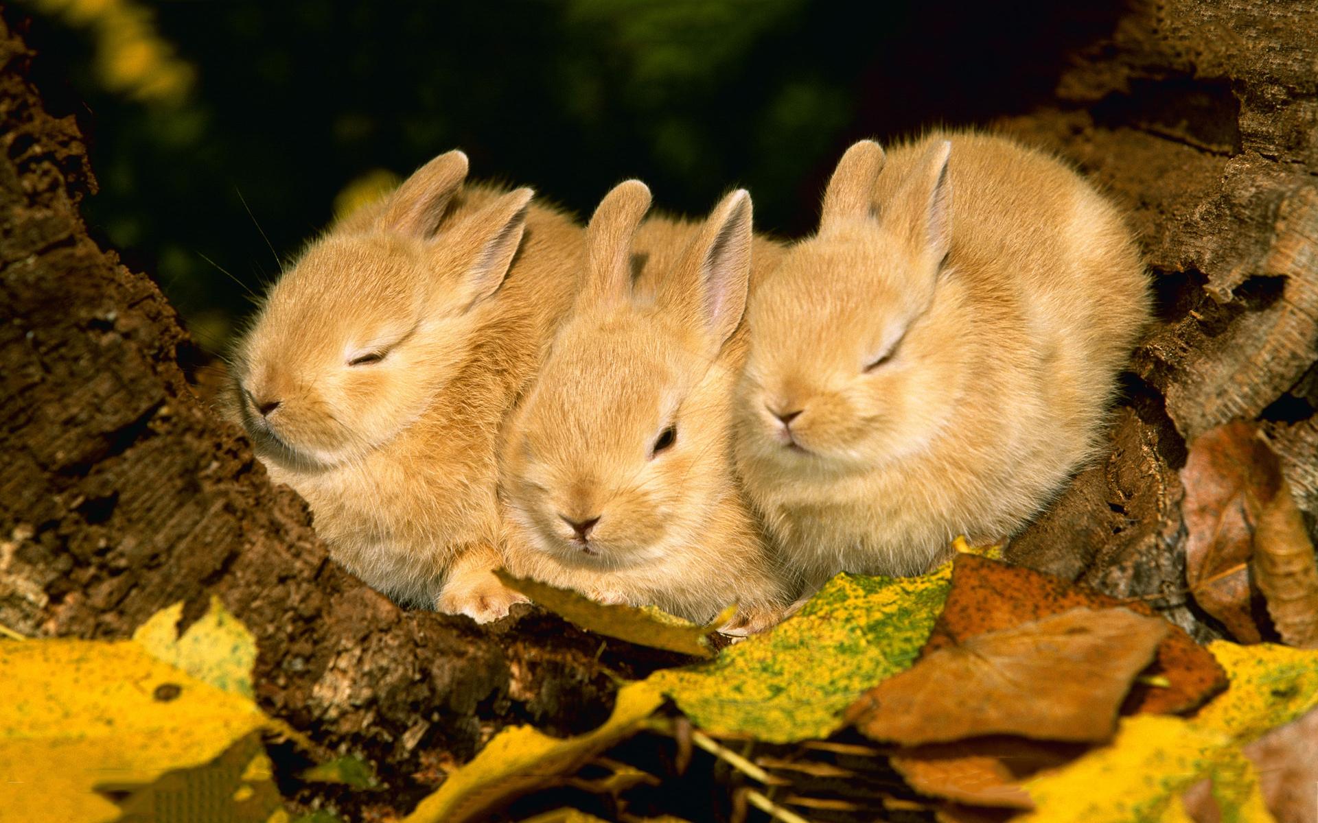 bunnies sleeping cute wallpaper