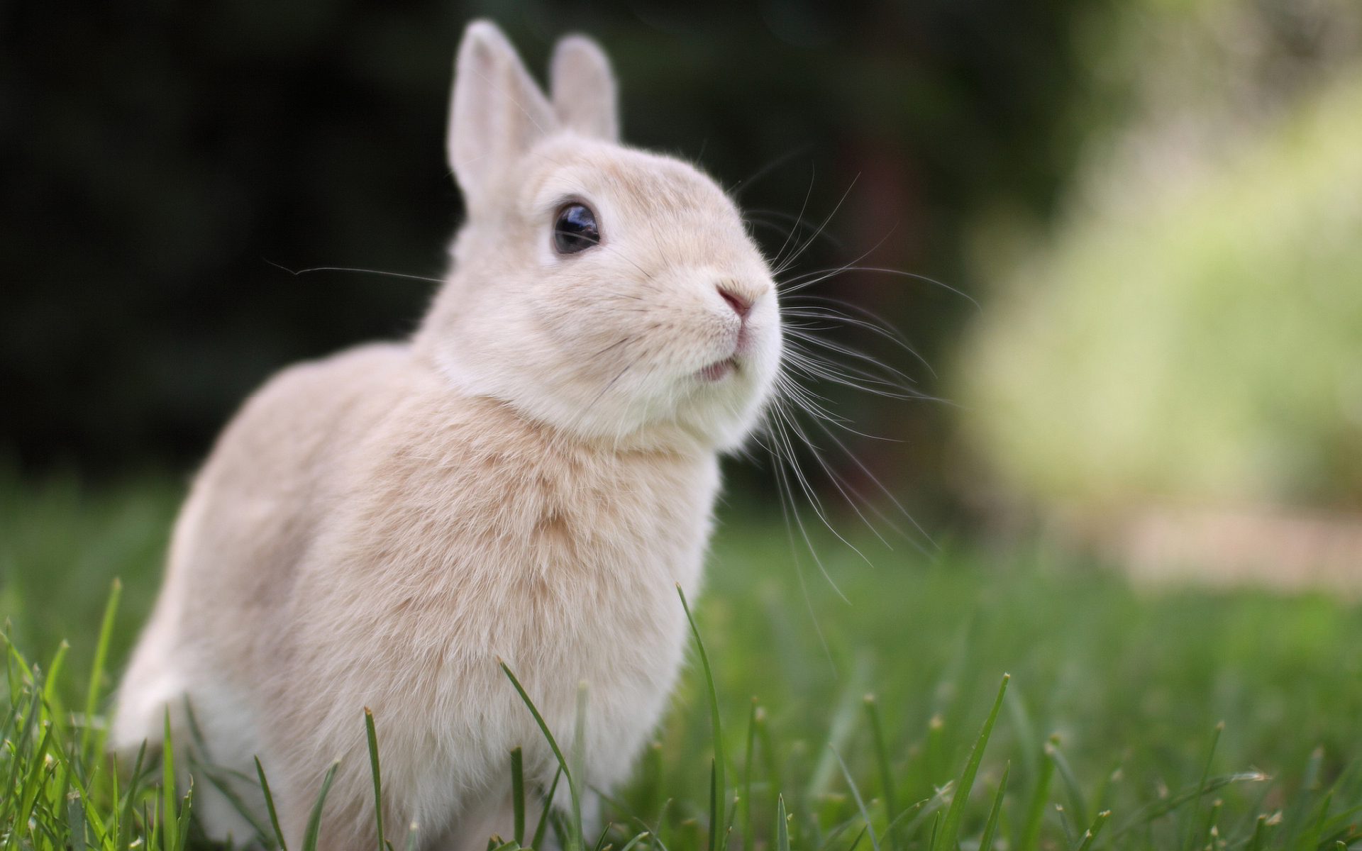 bunny cute pictures