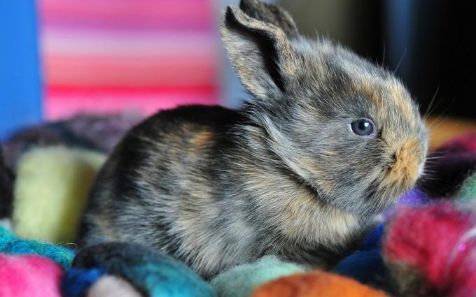 bunny cute small