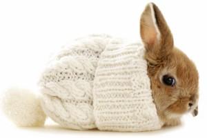 bunny rabbit cute wallpaper