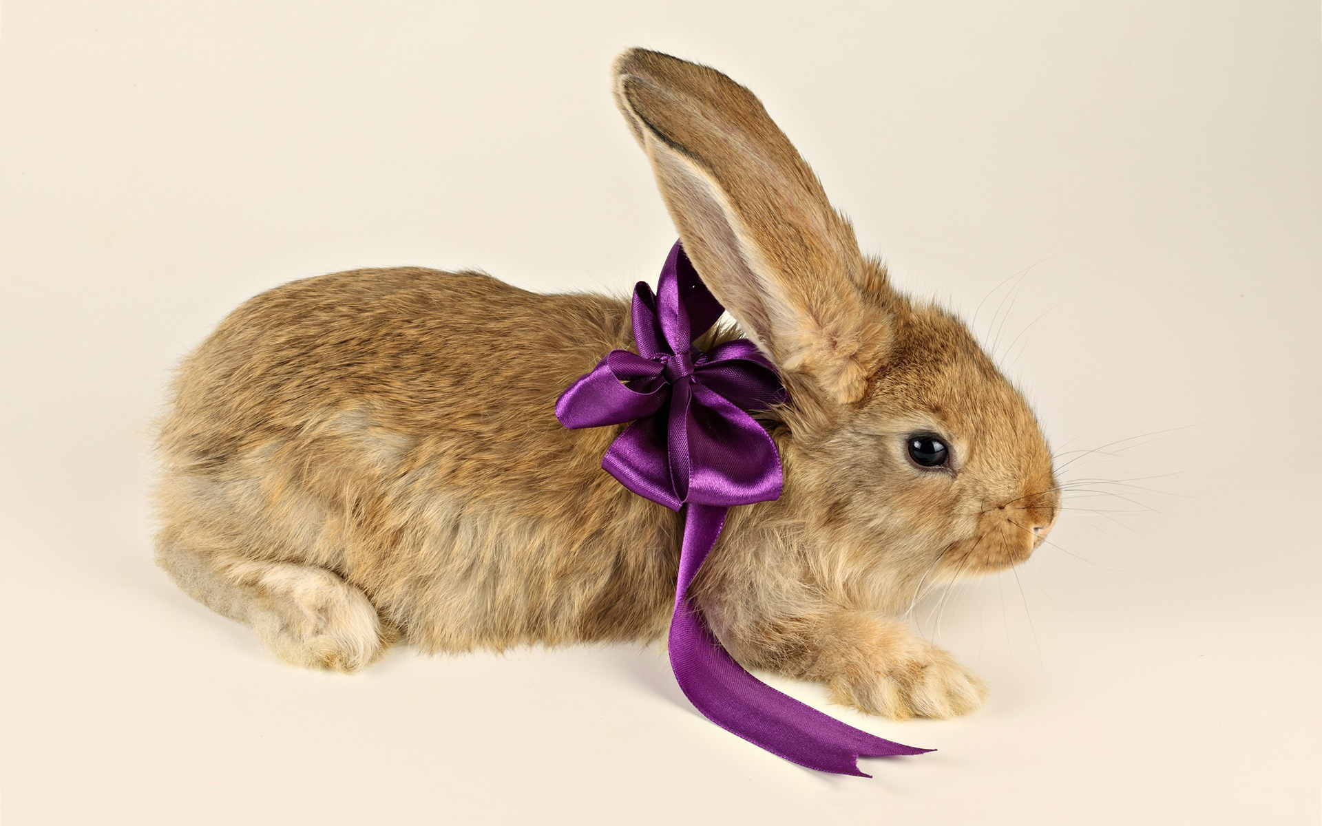 bunny sweet wallpaper