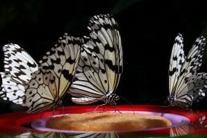 butterflies amazing