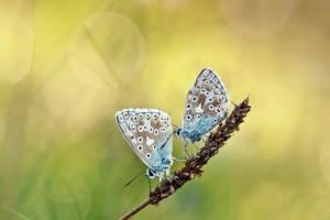 butterflies cool images