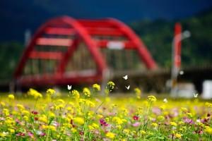 butterflies flowers summer season