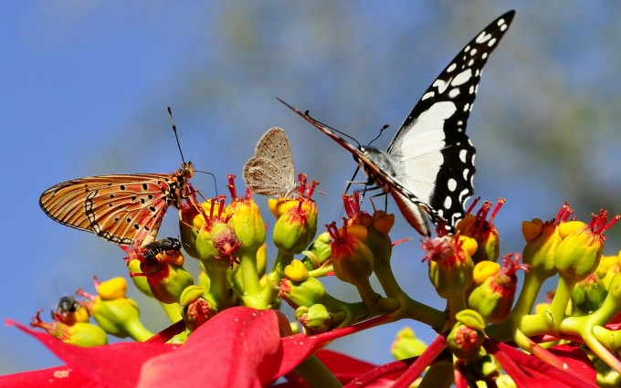 butterflies pictures full hd
