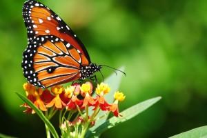 butterfly beautiful wildlife