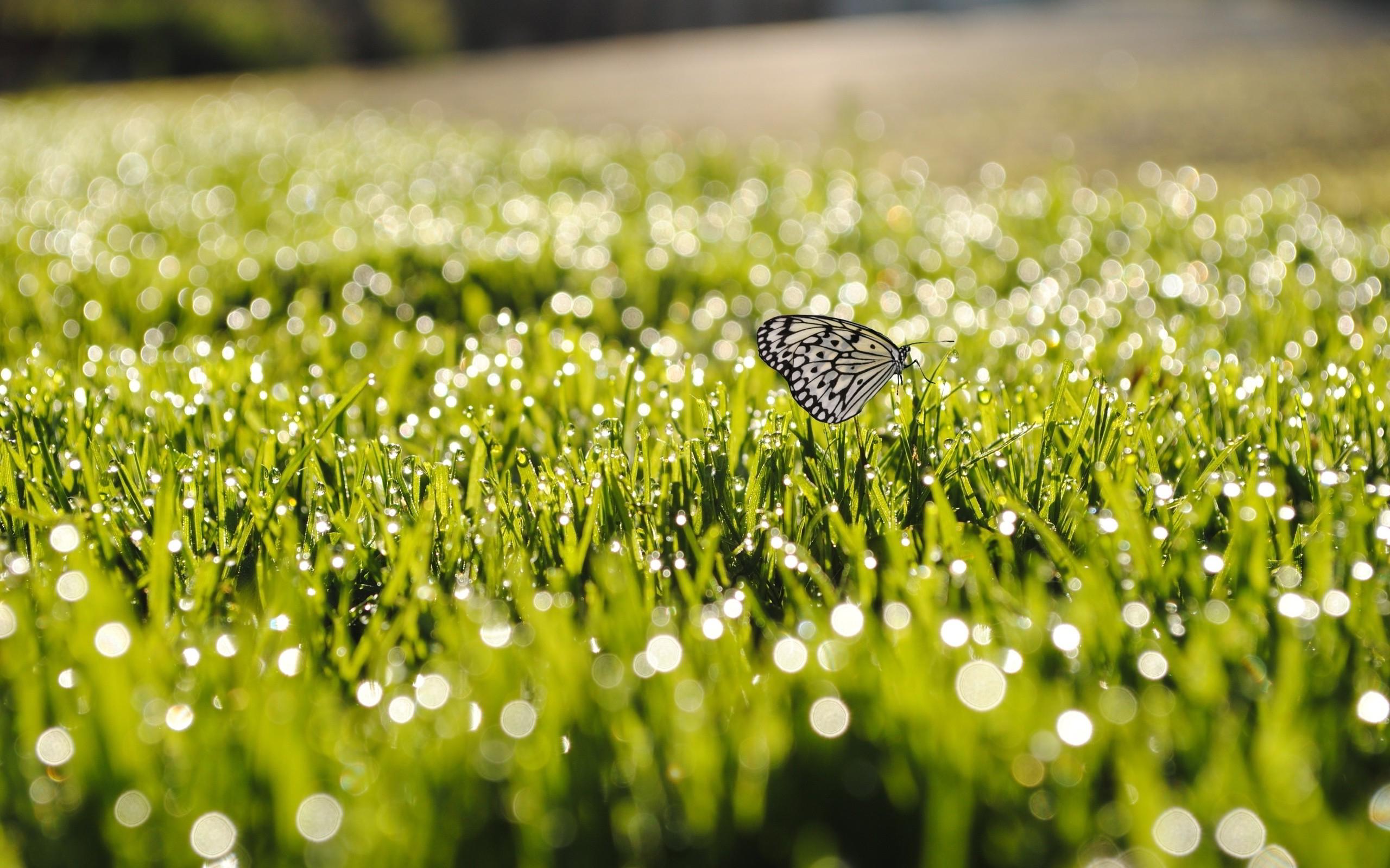 butterfly dew drops amazing