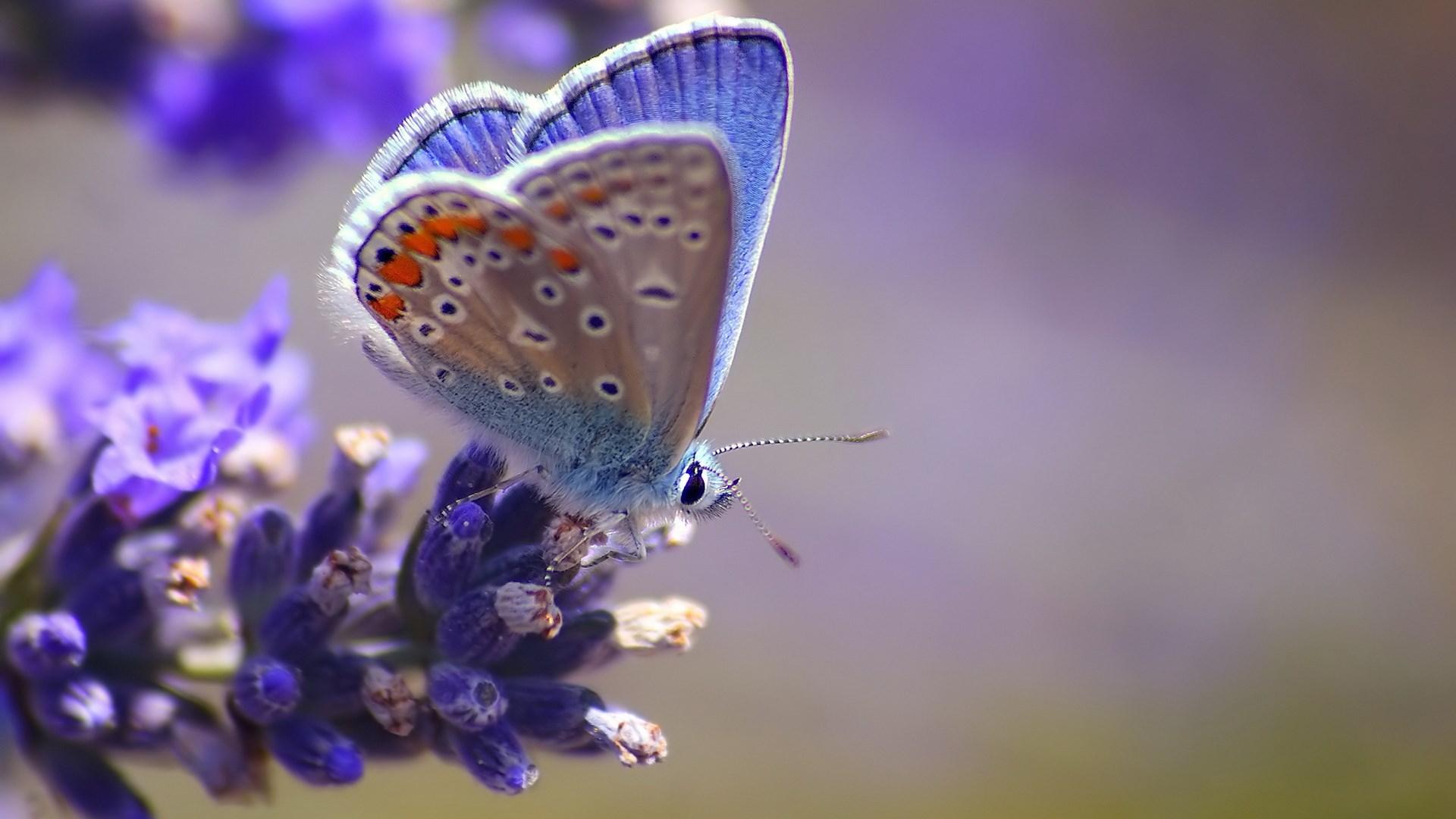 butterfly flowers wallpaper