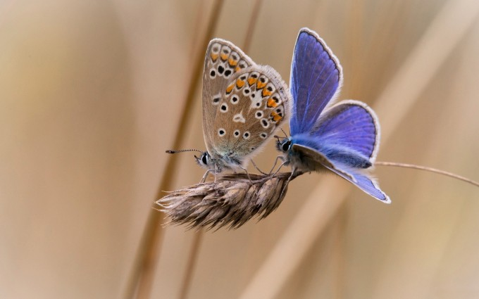butterfly photo hd
