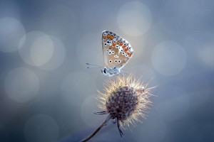 butterfly sweet wallpaper
