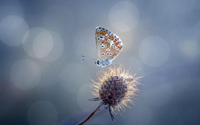 butterfly sweet wallpaper