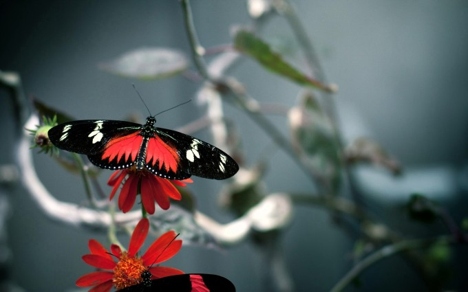 butterfly wallpaper hd