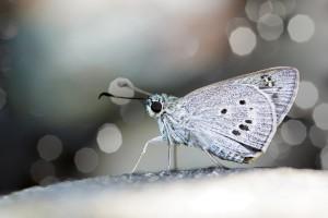 butterfly wings full hd 1080p