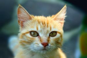 cat adorable
