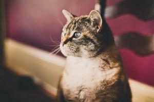 cat curious cute