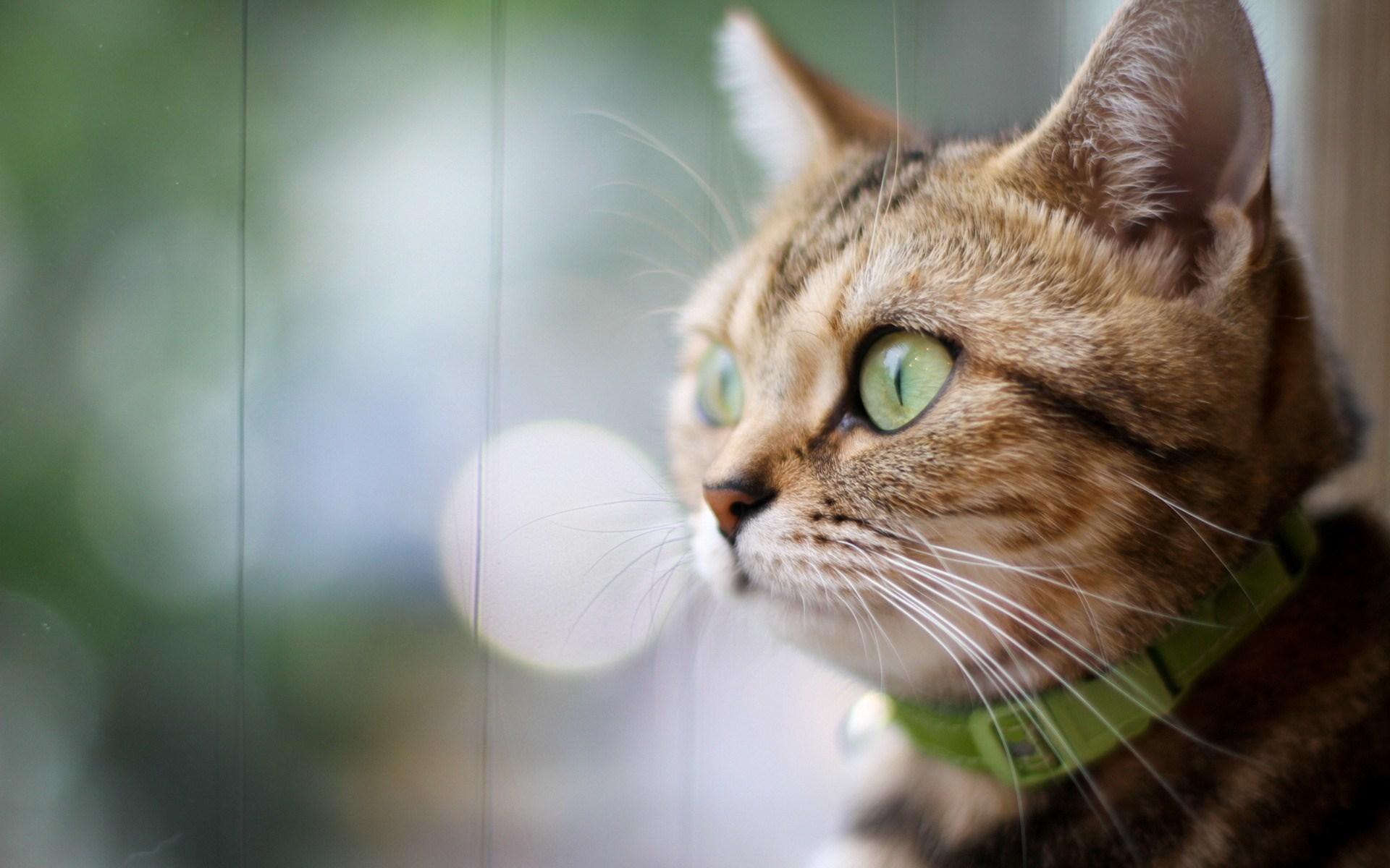 cat curious