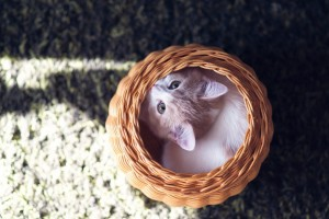 cat cute basket