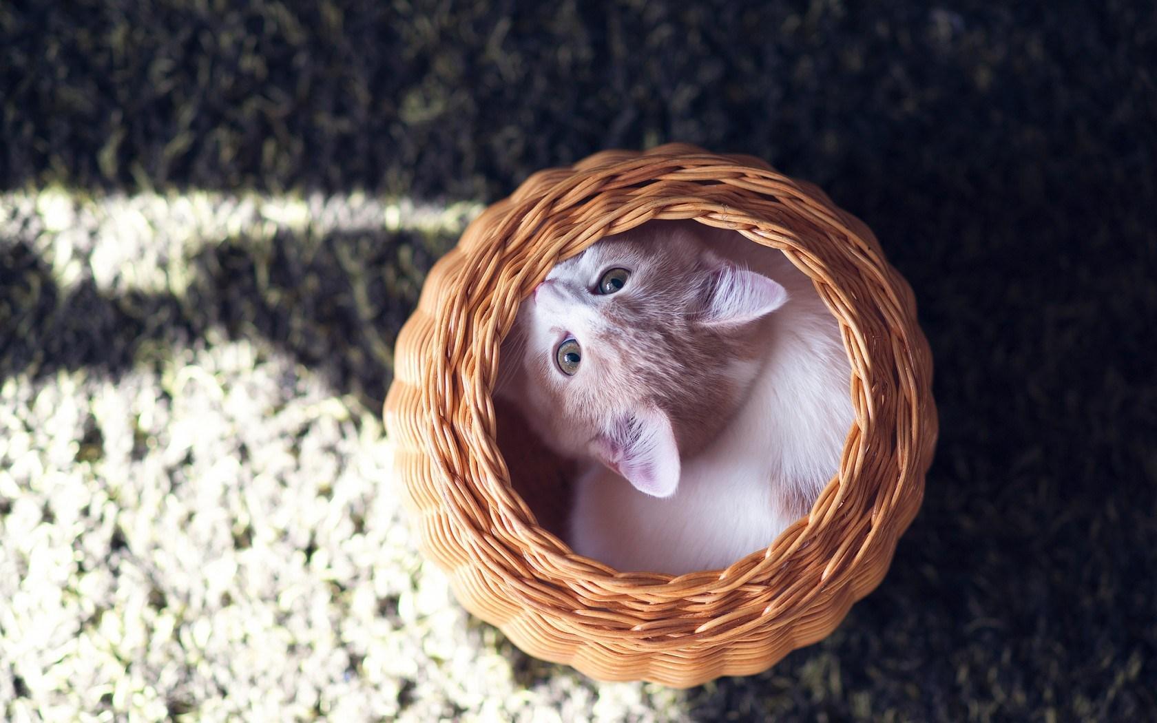 cat cute basket