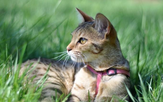 cat cute grass