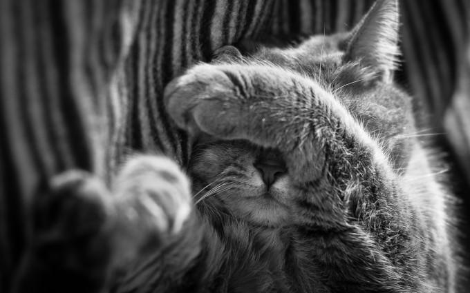 cat cute grey