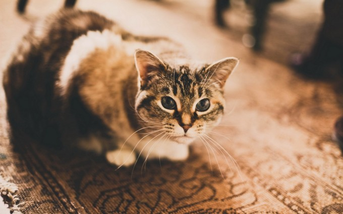 cat cute images hd