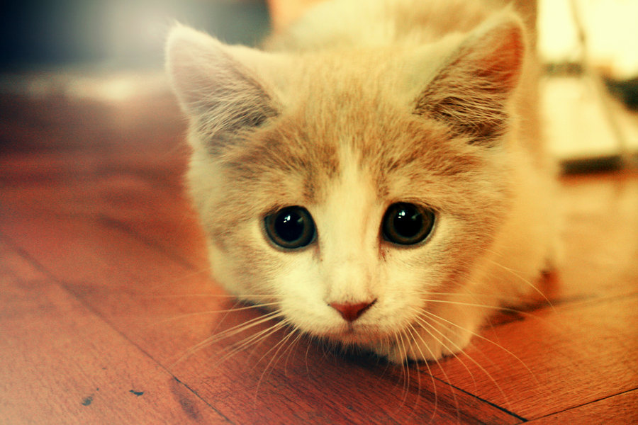 cat cute photos
