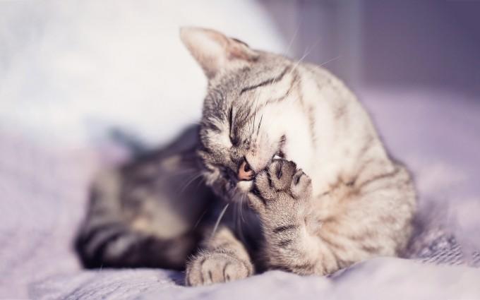 cat cute sweet