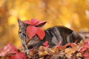 cat cute wallpapers autumn