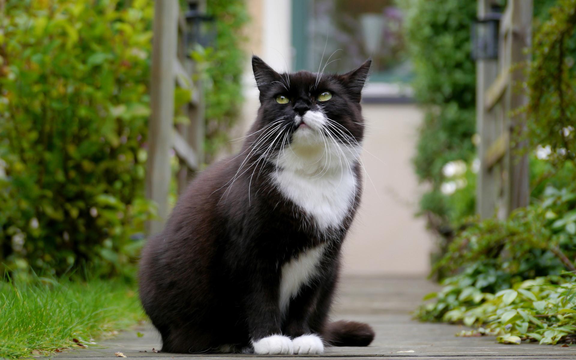 cat desktop photos