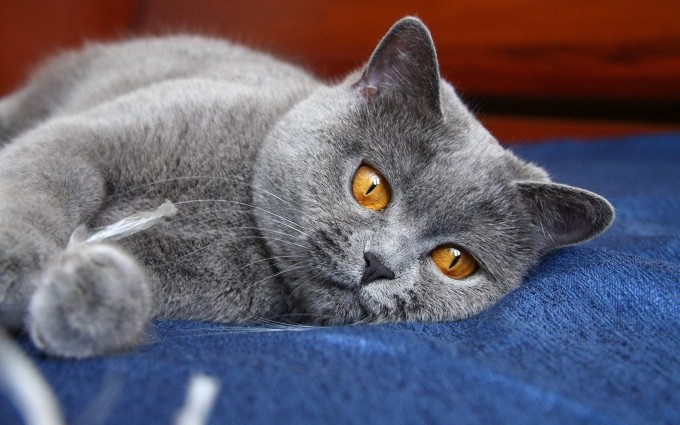 cat eyes funny