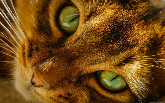 cat eyes images