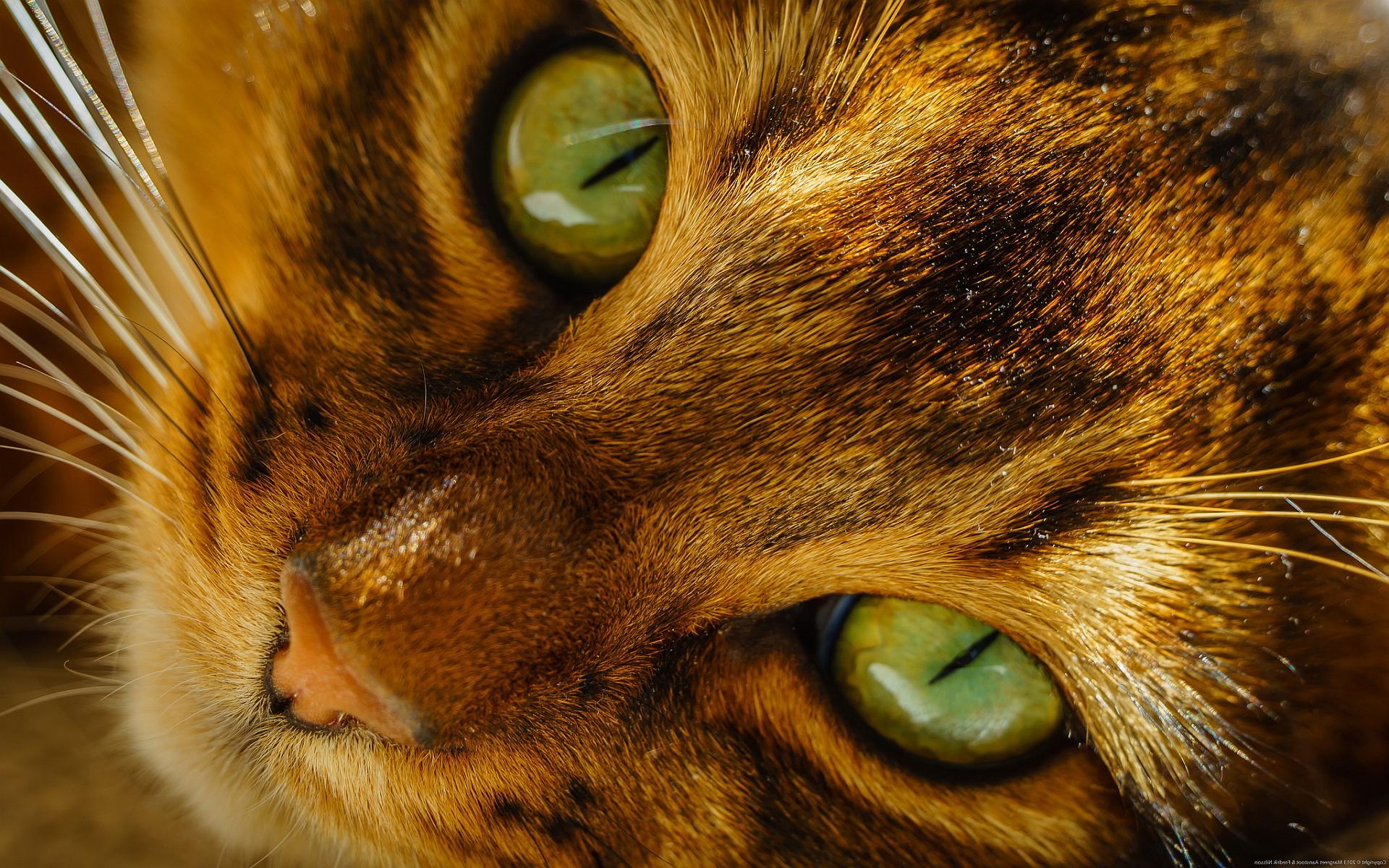 cat eyes images