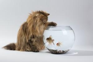 cat fish tank funny
