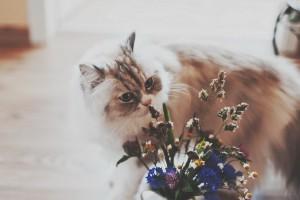 cat flowers hd