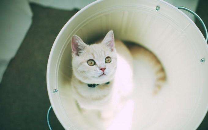 cat funny dazzling