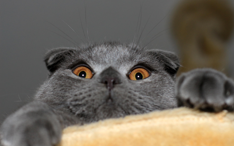 cat funny eyes