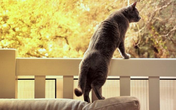 cat funny grey