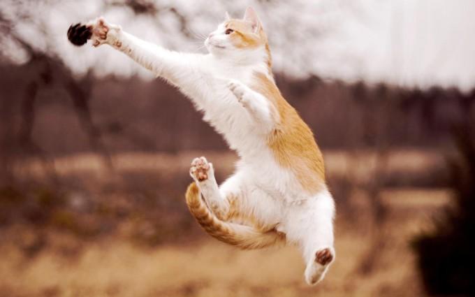 cat funny jump