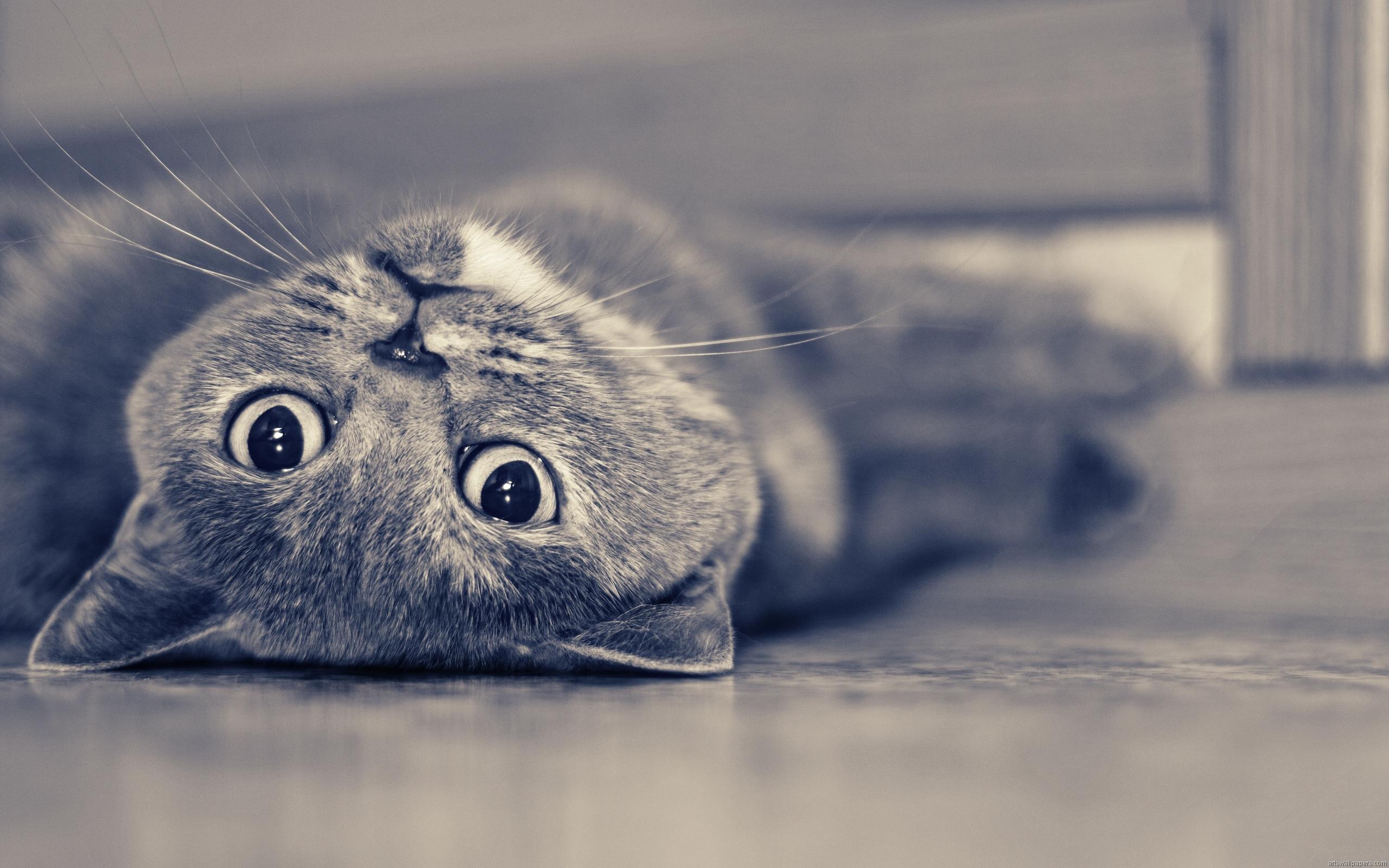 cat funny looks